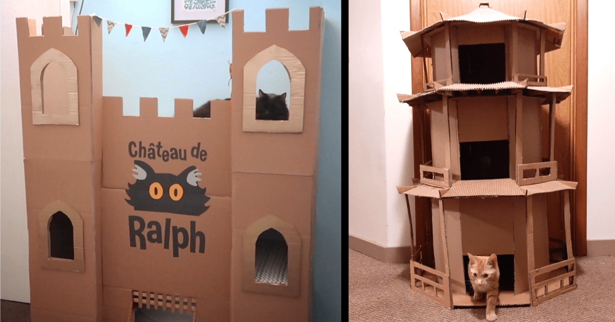 People Are Building Awesome Cardboard Forts For Their Cats and We're All About It