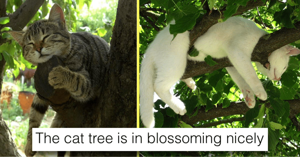 Cats Are Really Good at Sleeping in Trees and Here's the Proof
