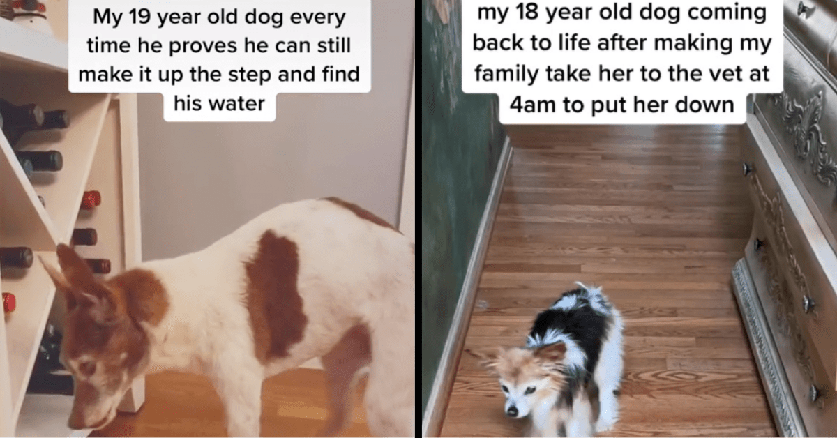 Check out These Super Sweet Senior Dogs of TikTok