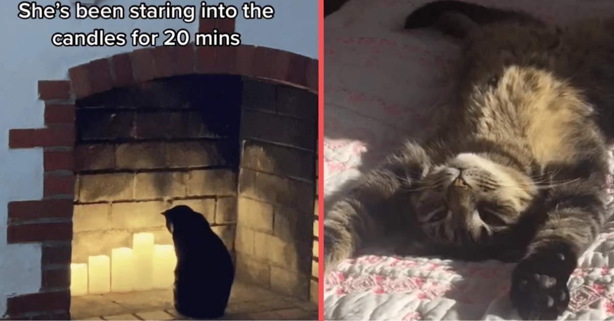Take a Look at These Adorable Cats of TikTok