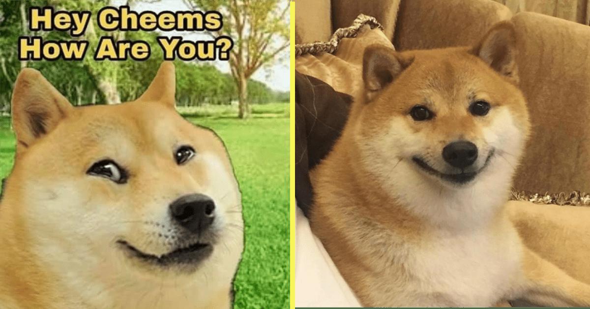 Meet the Original Dog Behind the Cheems Memes