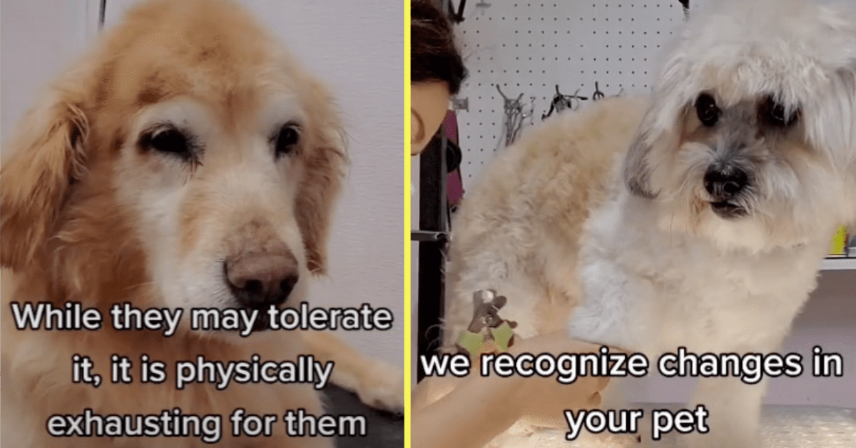 Groomer Shares Videos About the Things All Animal Owners Should Know