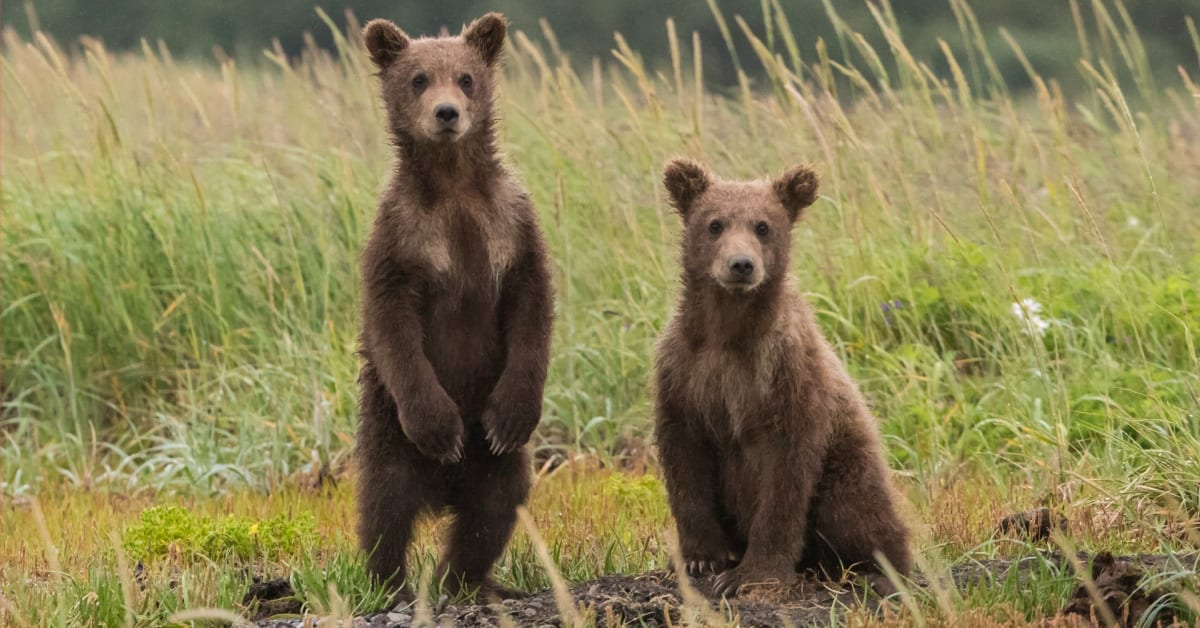 Spain Plans to Feed the Endangered Bears by Planting Thousands of New Trees